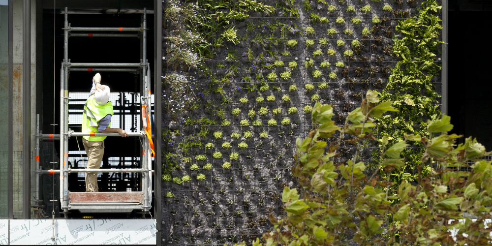 Patrick Blanc inspecting his Vertical Gardens for Jean Nouvel's One Central Park development, Central Park, Chippendale, Sydney, November 2012. Image courtesy of Frasers Property Australia.