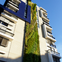 Vertical Garden at Trio, Camperdown : Patrick Blanc