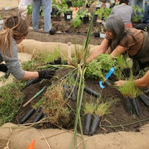 Victory Gardens 2008+ : Amy Franceschini from Future Farmers.