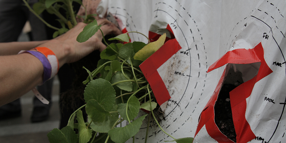 Natalie Jeremijenko, xClinic Farmacy, 2011-. Curating Cities workshop, Customs House, Sydney. Photograph: Susie Pratt. Image courtesy of the artist.