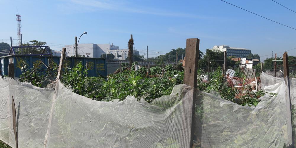 Green My Favela : Lea Rekow