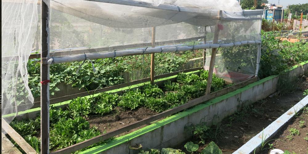 Lea Rekow, Green My Favela, 2014, Manguinhos food garden, Rio de Janeiro, image courtesy of Lea Rekow/ Green My Favela.