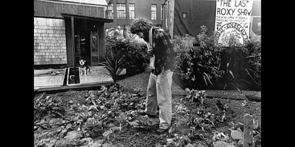 Vacant Lot of Cabbages : Barry Thomas